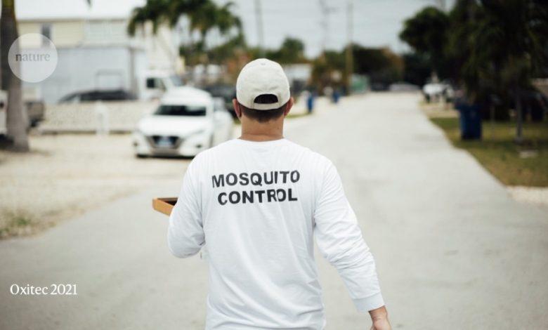 Photo of יתושים מהונדסים לראשונה ששוחררו בארצות הברית